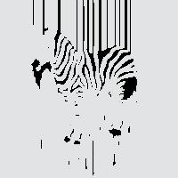 Зебра-штрихкод