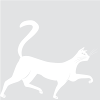 Грациозный кот