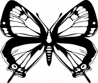 Великолепная бабочка