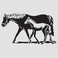 Лошадь-5