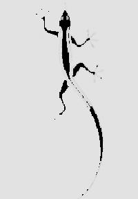 Ящерица-6